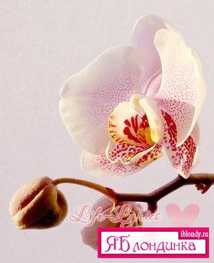Орхидеи. Общие сведения.